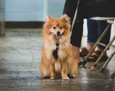 square-adult-dog