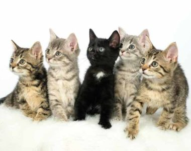 cats-kittens-group-pic-600