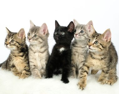 Adoptable Cats1